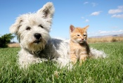 Dog and Cat in Field